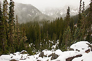 Fog rose from the subalpine firs and twisted and turned, dancing like a ballerina down the valley.