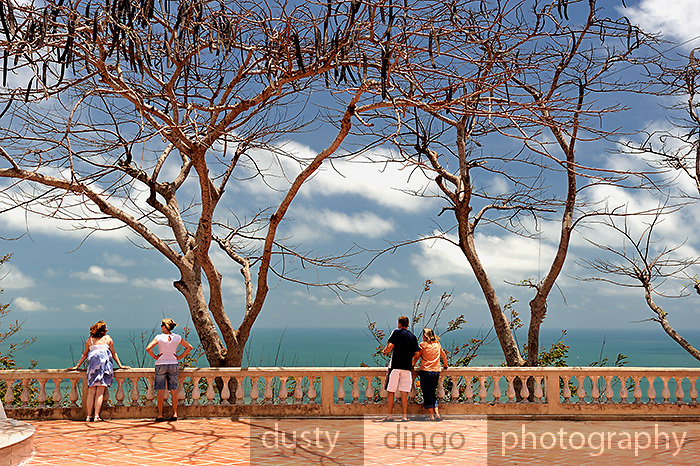 People standing under bare Poinciana trees (Delonix regia), gazing out over the South China Sea, from the site of the Vung Tau Lighthouse.