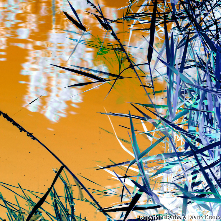 Abstract lily pads