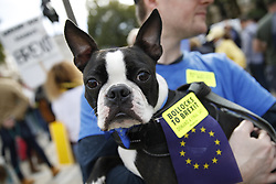 "© Licensed to London News Pictures. 07/10/2018. London, UK. Pro-Remain dog owners march on parliament to demand a ""People's Vote"" on the final Brexit agreement. Photo credit: Peter Macdiarmid/LNP"