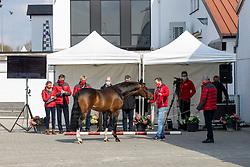 011, Woody KC<br /> Hengstenkeuring Brp- Azelhof - Lier  2021<br /> © Hippo Foto - Dirk Caremans<br /> 14/04/2021