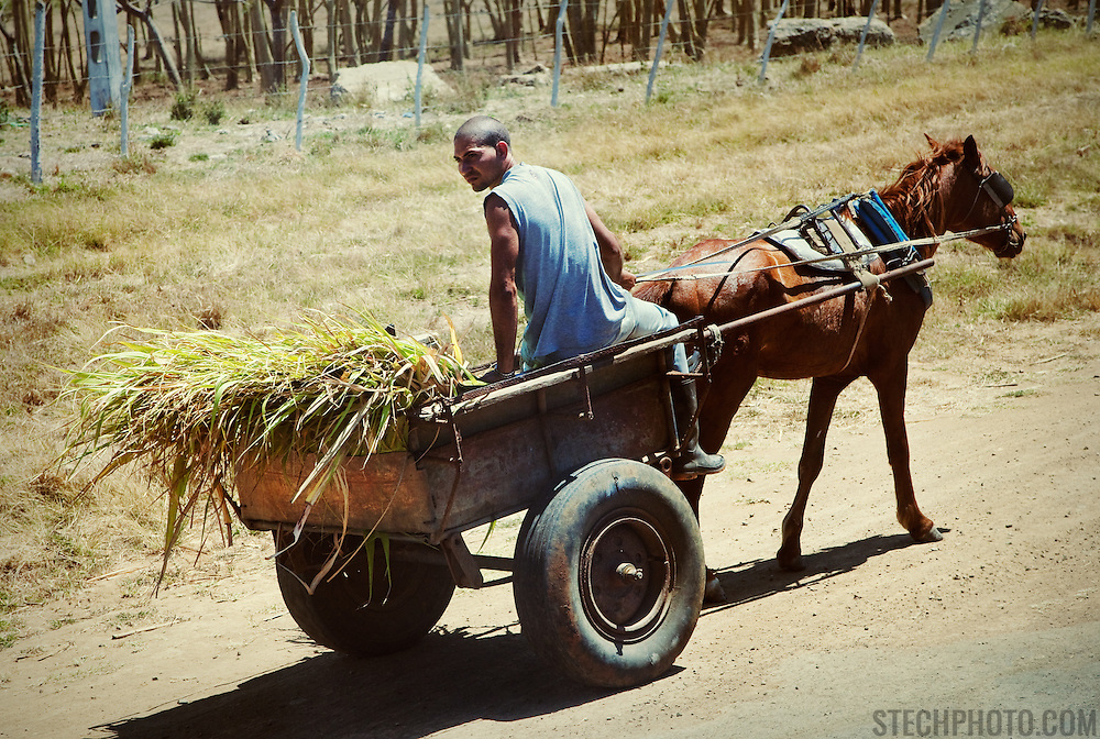 A young Cuban farmer on his cart being pulled by a horse in rural Cuba.