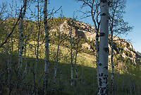Evening sunlight illuminates the cliffs of Sayle Canyon beyond a grove of aspen trees.
