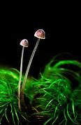 Forest fungi, New Zealand