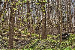 2012 March 18:  Debris, in this case a discarded rubber tire, lay amongst the trees of a nature preserve...This image has been prepared using High Dynamic Rage (HDR) processes.