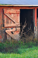 Red barn door and overgrown green grass, Merced County, Central Valley, California