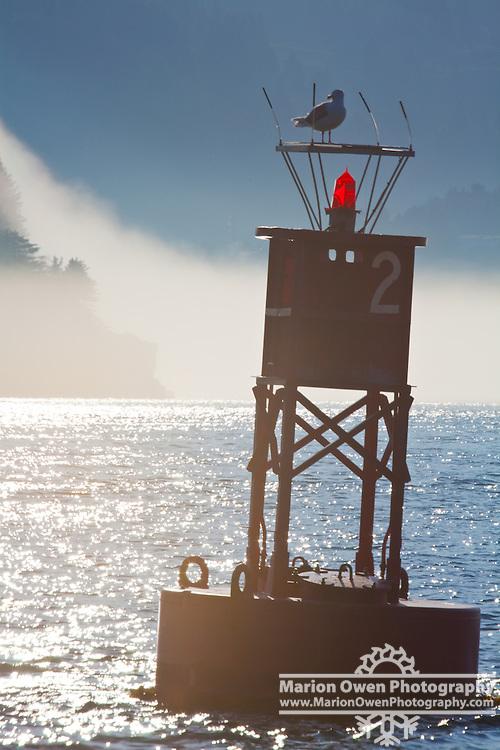 Glaucous-winged gull perched on red navigational buoy, Kodiak, Alaska