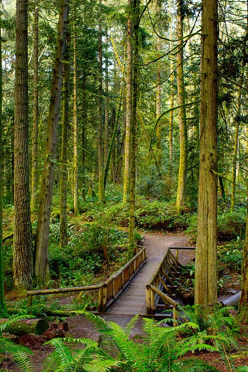 The Issei Creek Bridge in the Grand Forest on Bainbridge Island, Washington