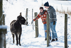 Young couple standing with donkey in barn, Bavaria, Germany