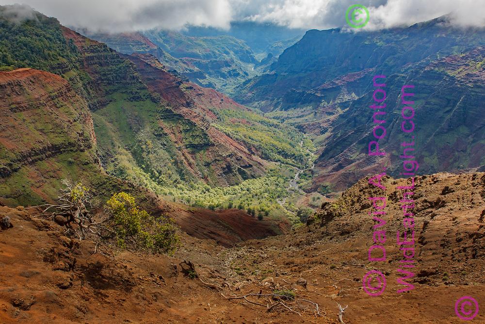 Waimea Canyon , Kauai, Hawaii, © David A. Ponton