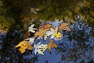 Salisbury Mills, New York  - Autumn scenes by the Moodna Creek and  Moodna Viaduct on Oct. 5, 2013.