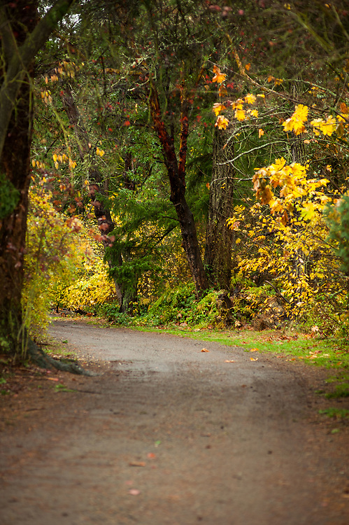 2017 NOVEMBER 20 - Autumn path at Lincoln Park in West Seattle, WA, USA. By Richard Walker
