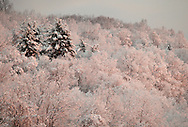 Pocatello, NY - Tree on a hillside are covered in snow at dawn on the morning after a storm on Dec. 6, 2009.