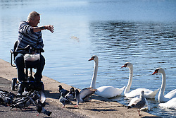 © Licensed to London News Pictures. 09/10/2015. Southsea, Hampshire, UK. A disabled man feeding the swans the warm and sunny October weather at Southsea Canoe Lake. Photo credit : Rob Arnold/LNP