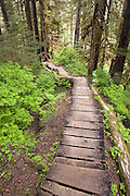 USA, Alaska, A boardwalk on the Rainbow Falls trail leads hikers through the Tongass National Forest on Wrangell Island. Digitally manipulated.