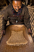 Apatani tribal elder Atta Yadd dries and sifts recently threshed rice in her village of Hijja, Arunachal Pradesh. The Apatani tribe are one of hundreds of indigenous tribes scattered across India, particularly the north east. Their origins are from Mongolian nomadic tribes whom settled on the Ziro plateau, close to the Chinese border, they practice fixed agriculture as well as forestry, planting trees on the rim of the plateau as well as bamboo forests from which they derive fire wood, building their homes as well as using the bamboo for all manner of applications in their daily lives, cooking utensils and household containers amongst other uses. They carefully cultivate bamboo forests allowing them to grow, but not flower and die, as this would spell disaster for their very own existence. They also tend to their rice fields and live stock for what is mostly a subsistence economy. The Indian constitution recognizes over 500 indigenous tribes, which account for 8.5% of the total population