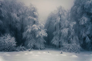 White forest covered in heavy snow