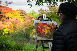© Licensed to London News Pictures. 22/10/2016. Godalming, UK.  Resident Winkworth painter for 2016, Sophie Keir, capturing the autumn displays of colour at Winkworth Arboretum in Surrey today.  Photo credit: Rob Arnold/LNP