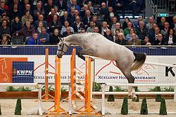 090, Kannan Jr<br /> KWPN Stallionshow - 's Hertogenbosch 2018<br /> © Hippo Foto - Dirk Caremans<br /> 31/01/2018