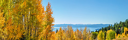 """""""Aspens Above Lake Tahoe 17"""" - Stitched panoramic photograph of yellow and orange aspen trees in the Fall at a grove above Lake Tahoe."""