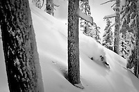 Some of the best tree skiing in the world! North West Trees