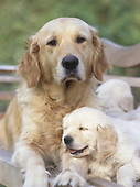 Dogs Photographic