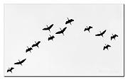 Hadada ibis silhuette from Lake Bogoria, Kenya.  Nikon D4, 200-400mm + TC17 @ 550mm, f6.7, 1/1000sec, ISO1000, Aperture priority