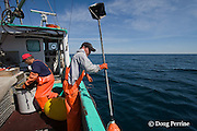 crew of commercial longline boat retrieves radar reflector pole and float while fishing for porbeagle sharks, Nova Scotia, Canada ( North Atlantic Ocean )