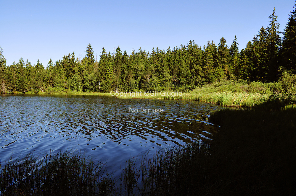 Suise, canton du Jura, Les Franches-Montagnes, espace protégé et éco-système de étang de la Gruère // Switzerland, Jura canton, Franches-Montagnes, protected and anatural area of pond of Gruere