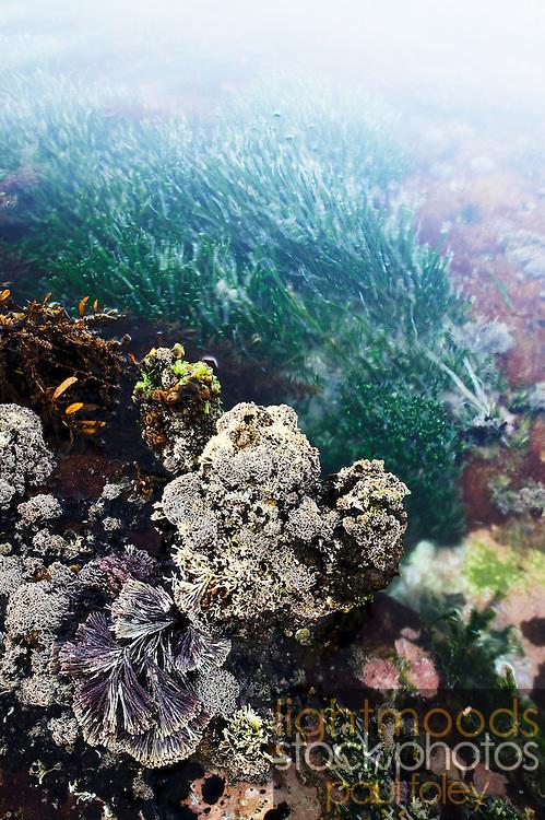 Coral at Dudley Beach, Australia