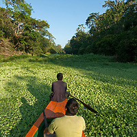 Indian guides study the rain forest as their tourist boat navigates through dense water hyacinth in the Yanayacu River in Peru's Amazon Jungle.