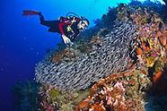 Indonesia, North Halmahera & Raja Ampat