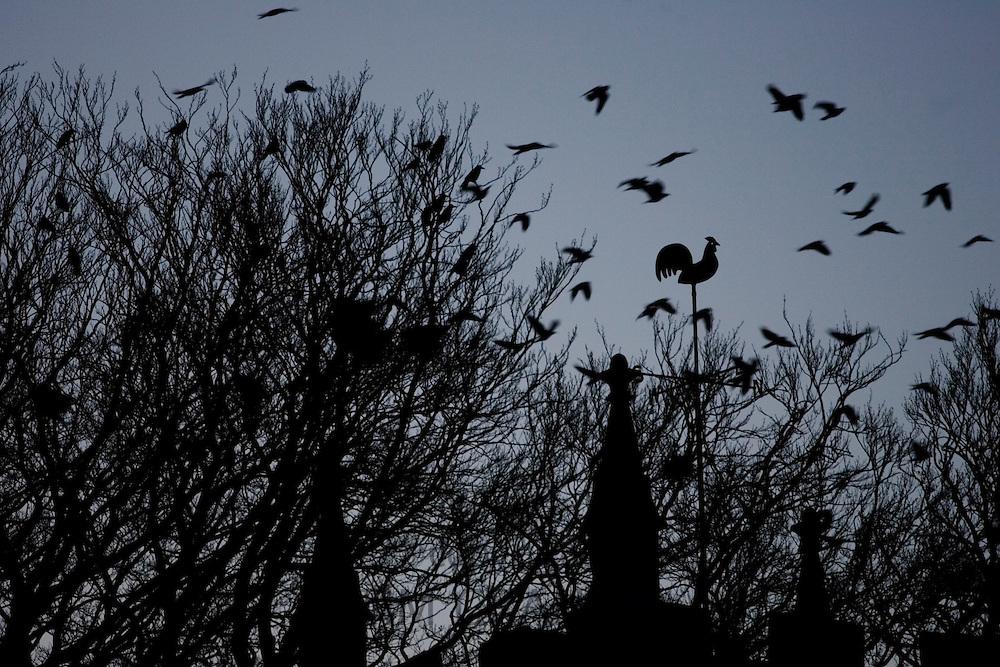 Flock of birds fly above bird weather-vane, Oxfordshire, United Kingdom