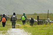 Alpine transhumance (Jagdhausalm) in the Defereggen Valley. High Tauern National Park (Nationalpark Hohe Tauern), Central Eastern Alps, Austria | Tag der Artenvielfalt. Jagdhausalm am Ende des Osttiroler Defereggentals. Nationalpark Hohe Tauern, Osttirol in Österreich