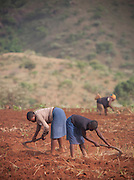 Farmers ploughing the fields along the Ring Road in north-western Cameroon, near Babungo.