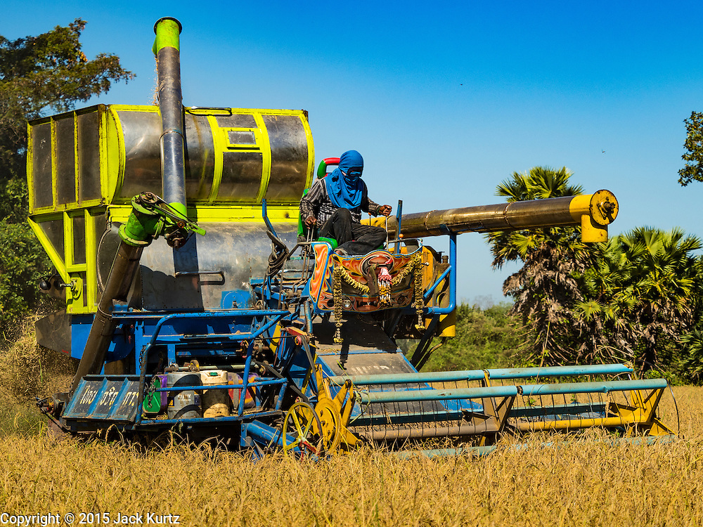 """08 DECEMBER 2015 - KO WAI, NAKHON NAYOK, THAILAND: A worker drives a rice harvesting machine through a paddy during the rice harvest in Nakhon Nayok province, about two hours north of Bangkok. Thai agricultural officials expect rice prices to go up by as much as 15% as global production of rice is cut by the Pacific Ocean El Niño weather pattern. Thailand's rice production is expected to drop in the coming year. Persistent drought has reduced the main crop, currently being harvested, and the military government has ordered farmers not to plant a second crop of """"dry season"""" rice to conserve Thailand's dwindling supply of water. Thailand's water reservoirs are at their lowest seasonal levels in recent memory and little rain is expected during the dry season, which lasts until June.    PHOTO BY JACK KURTZ"""