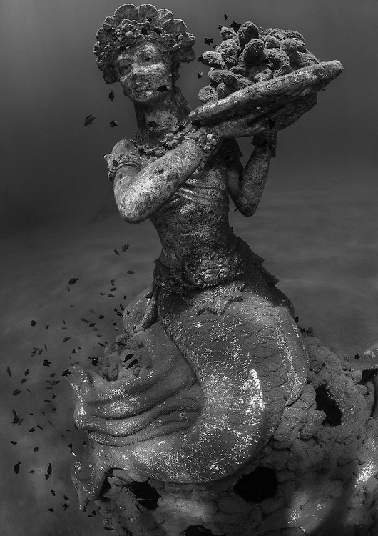 INDONESIA. Amed, Bali. July 18th, 2013.  A mermaid statue, made using white ph neutral cement rests in Jemeluk Bay. She sits at a depth of 10-meters and can be found 30-meters from shore. She was sunk to act as an artificial reef to provide a place for corals to settle and for fish to find shelter inside the base of the structure.