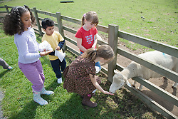 Children feeding a sheep on a visit to a city farm,