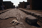 In the foreground a local dog lies down in the afternoon heat on rutted ancient Roman flag stones while in the background tourists walk down the old highway in Pompeii, Italy. Next to his exhausted body, the grooved ruts carved by wooden wheels can still be seen next to a large stepping stone which let chariots ride over the stone yet allowed pedestrians to step over the road. Pompeii is a ruined Roman city near modern Naples in the Italian region of Campania. It was completely buried during a catastrophic eruption of the volcano Mount Vesuvius on 24 August 79 AD. The volcano covered Pompeii under many metres of ash, and it was lost for over 1,600 years before its accidental rediscovery in 1748. Since then, its excavation has provided an extraordinarily detailed insight into the life of a city at the height of the Roman Empire. Today, it is a main tourist attraction of Italy and a UNESCO World Heritage Site. Pompeii has become a popular tourist destination; with approximately 2.5 million visitors a year, it is the most popular tourist attraction in Italy.