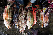 Coral Reef Fish in market<br /> Bos Wesen Market<br /> Sorong<br /> West Papua<br /> Indonesia