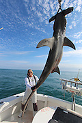 """Miami Sea Fisherman Mark the shark pictured with a hugh Hammerhead  shark that was caught on Saturday over 14' in length and weighing over 850 lbs..it took Mark 4 hrs to land, In his belly was 6 stingrays, a tarpon head, 2 groupers, 4 lion fish, and part of a sea turtle, <br /> <br /> Mark said """"As far as hammerheads go..that's one the the biggest in these waters""""<br /> <br /> Mark the Shark, who is licensed Shark fisherman by the state of Miami, Tiger sharks and hummerhead sharks are protected upto 3 miles in state waters can be caught but are all tagged and released, sharks outside 3 miles in federal waters can be harvested for scientific purpose, research and even food for restaurants,<br /> ©Exclusivepix Media"""