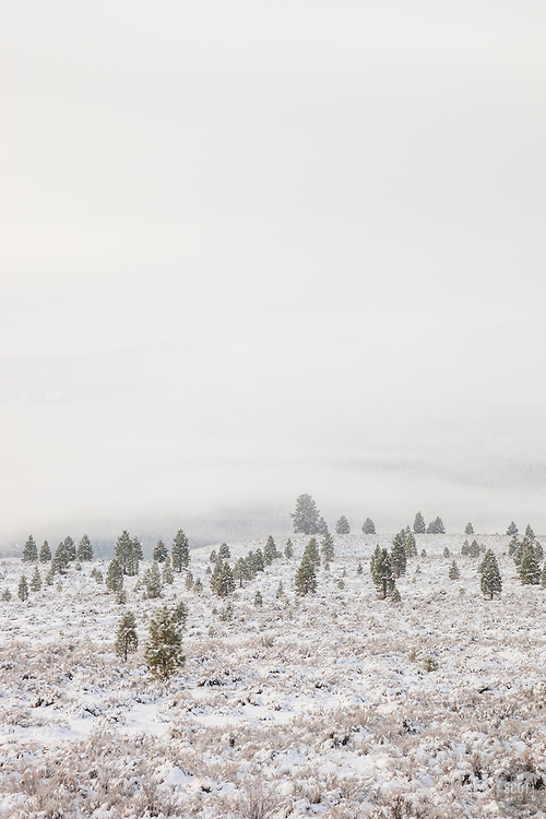 """""""Snowy Martis Valley 1"""" - Photograph of a foggy and snow covered Martis Valley in Truckee, California."""