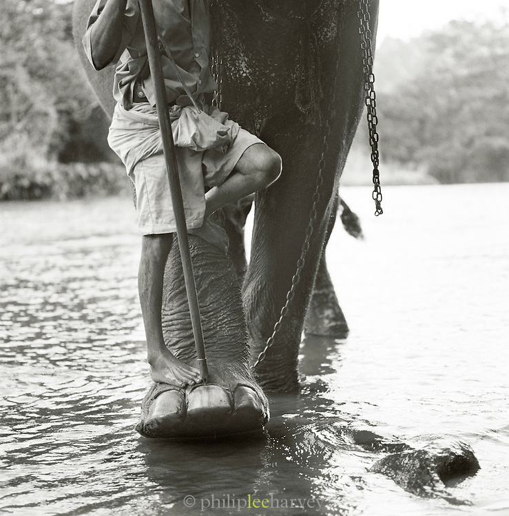 Riverside Elephant Park Near Kandy, Sri Lanka.
