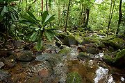 Stream and view of tropical rainforest, Masoala National Park, Madagascar, largest of the island's protected areas, UNESCO World Heritage Site, Masoala peninsula is exceptionally diverse due to its huge size, and variety of habitats