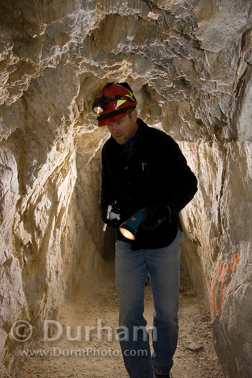 Biologist Chris Loggers searches for hibernating bats in the abandoned  'Falling Man' gold mine during a bat survey. Coleville National Forest, Washington.