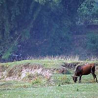 Asia, China, Guilin. Peasant and buffalo along Li River in rural China.