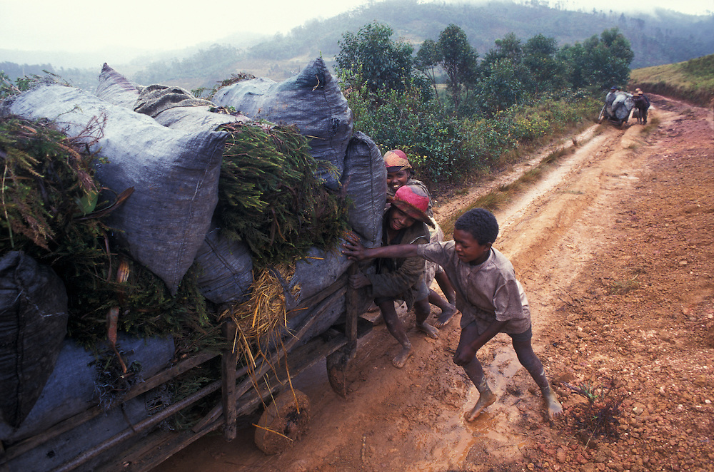 Fianarantsua, Highlands, Madagascar Poverty is rife in the Fianarantsua Highlands of Madagascar Hauling charcoal to be used as fuel.