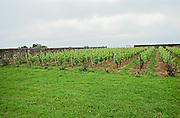 Vineyard. Clos du Portail, Domaine Catherine et Didier Champalou, Vouvray, Loire France
