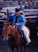 Chilean gaucho or cowboy, Nestle Vasquez, assisting with the weaning of calves from cows on the Espil Ranch, Smoke Creek Desert, Nevada.