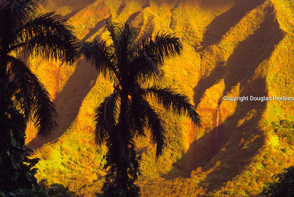 Palm tree, Nuuanau valley, Oahu, Hawaii<br />